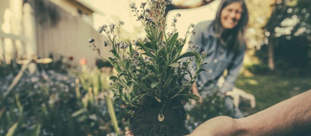 Summer Bucket List Ideas - build a garden