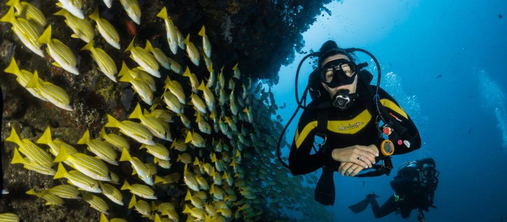 Summer Bucket List Ideas - Go scuba diving
